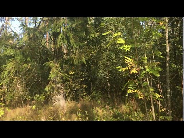 Filosofía en el bosque 41. Actuar la epistemología.