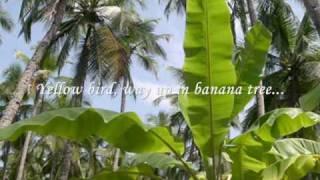 Yellow Bird [Chỉ Là Giấc Mơ Qua] by Johnny Tillotson (with lyrics)