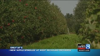 New 'apple spindles' at West Michigan orchards