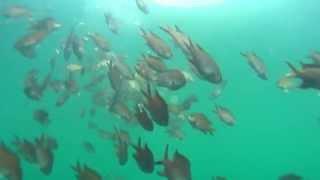 淡路島津名港 水中映像 波止先端付近