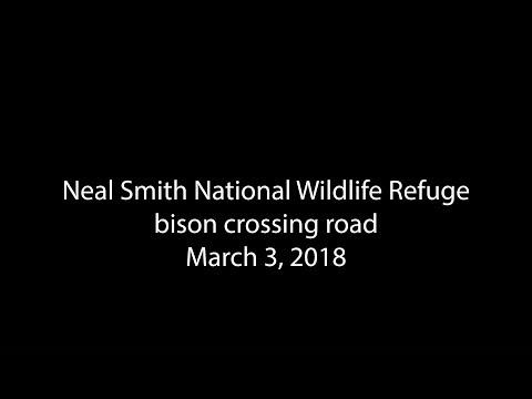 Neal Smith bison 2018 03 03