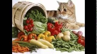 витамины для кошек сердечки