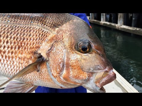 Melbourne Docklands Snapper Fishing Madness!
