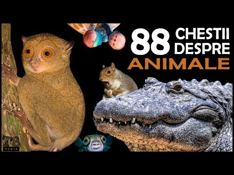 88 de Chestii Interesante despre Animale