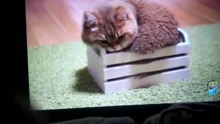 Приколы с котами _ТОПовая подборка Смешные Коты под музыку