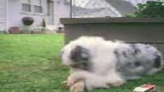 Собака курит WTF