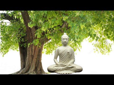 The Bodhi Tree by The Wayfarers