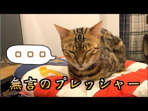 ロゼのご飯プレッシャー20分耐久動画 【奥さんのちびちゃん公開】