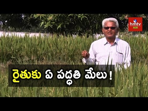 Different Methods of Agriculture | Natural Farming | hmtv Agri