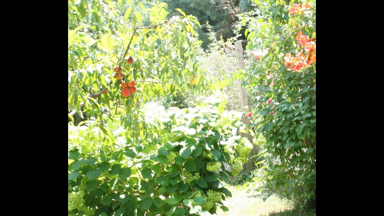 Amenagement du jardin paysager - YouTube