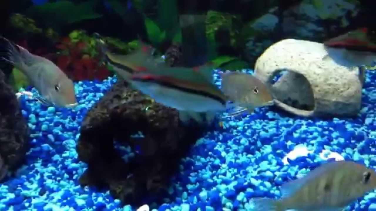 Freshwater aquarium fish that get along - Beautiful Freshwater Fish Getting Along