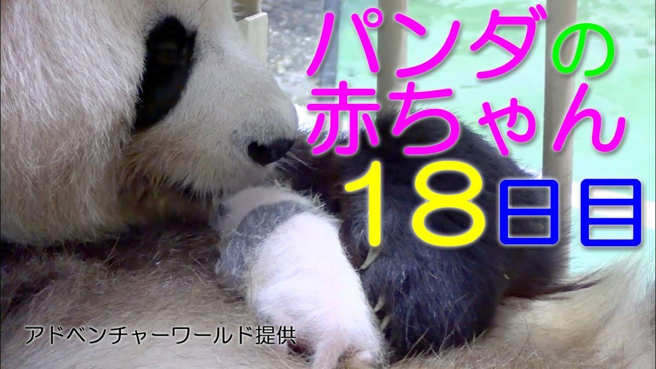 球 パンダ 肉 からだのしくみ〜肉球の秘密〜 【動物まめ知識】|ペットライフ|獣医師や動物看護師が贈るペットコラム