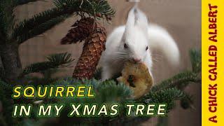 Albino Squirrel needs help finding it's way home