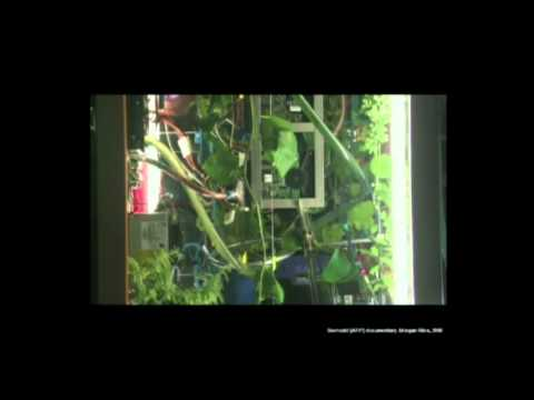TEDxFlanders - Angelo Vermeulen - Biomodd: Art, gaming and ecology