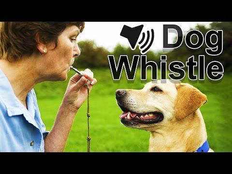 Do Dogs Like The Sound Of A Dog Whistle