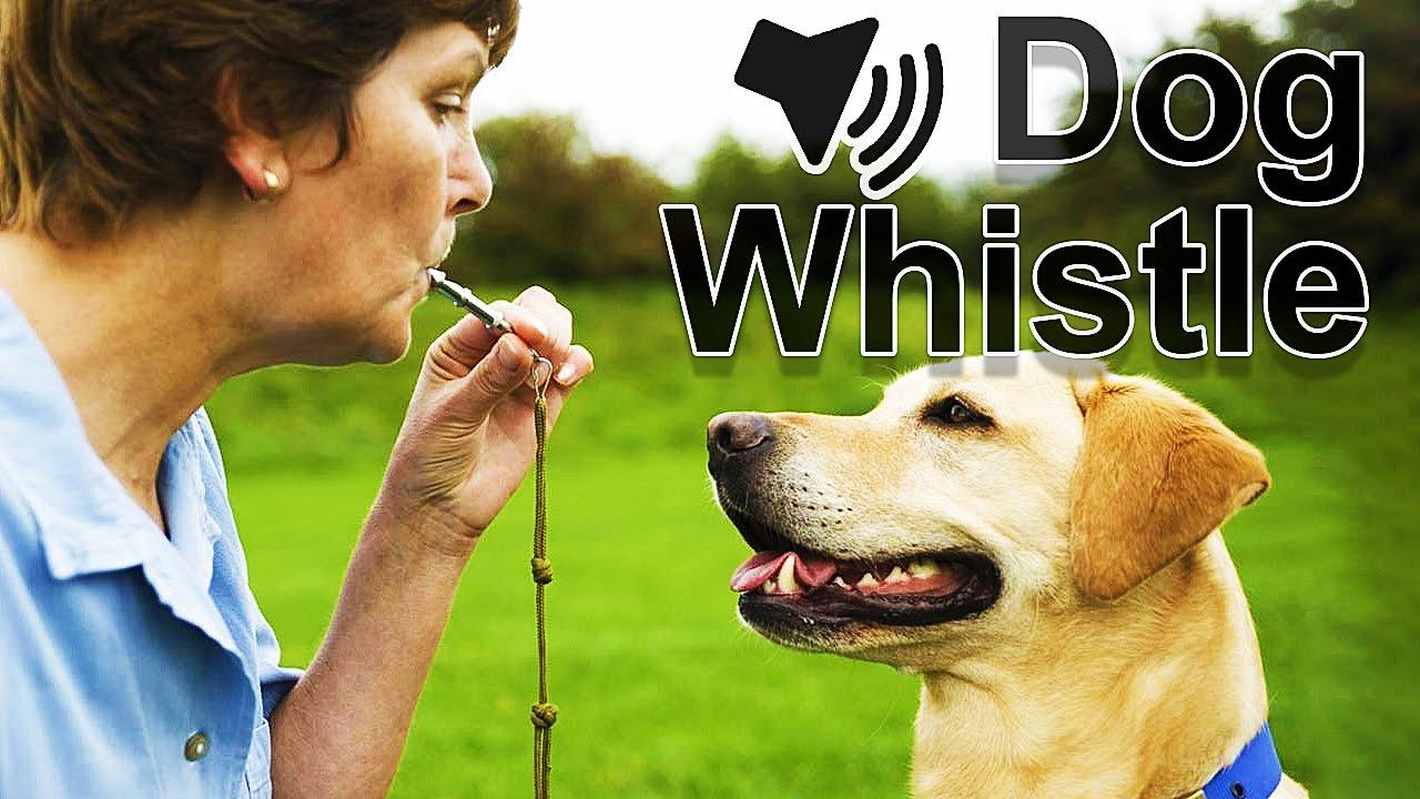 Dog Whistle Sound - YouTube