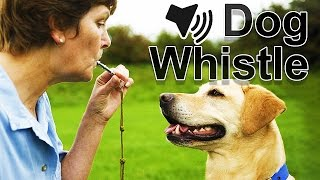 Dog Whistle Sound