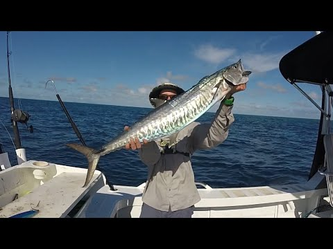 Spanish Mackerel Fishing | Crazy Offshore Session Townsville, North Qld
