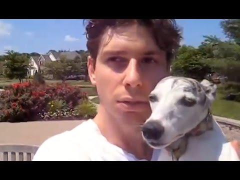 Cute Whippet Dog Story: Man's Best Friend