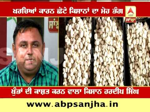 ABP SANJHA AGRICULTURE SPECIAL: An Inspirational Farmer Hardeep Singh who grows Mushrooms
