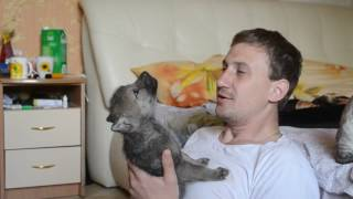 Man Teaches Wolf Pup to Howl