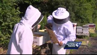 Local beekeeper working to save honey bees