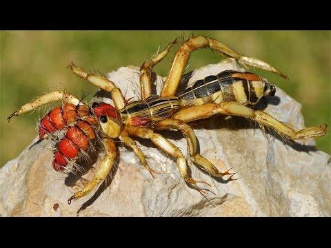 Deadliest spider in the world - photo#9