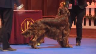 Ladies Kennel Association 2016 - Gundog group FULL