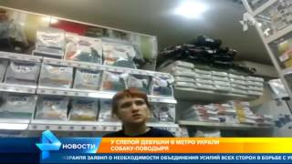 В Москве волонтеры ищут собаку поводыря, которую украли у слепой девушки