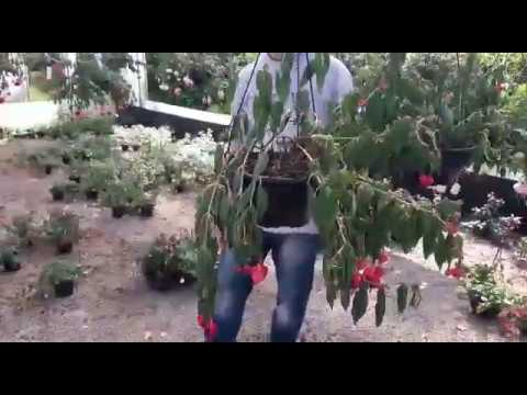 Falta de luz prejudica produção de flores em Santa Cruz