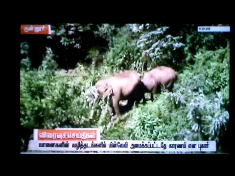 Elephants entered residencial areas in  tamilnadu