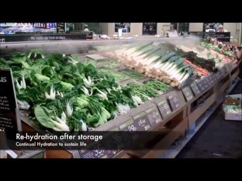 Contronics UK Supermarket short