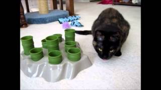 Ruby and the Aikiou Stimulo Interactive Feeder/Puzzle Toy