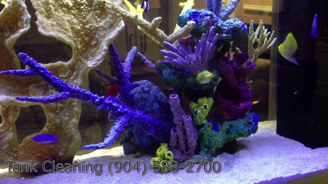 Fish tank cleaning service - Best Fish Aquarium Companies 904 588 2700 Jacksonville Florida