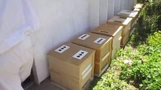 За 1 минуту заселяем пчел в Кассетный павильон