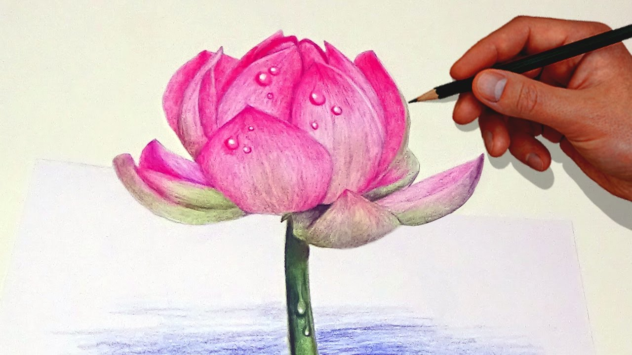 Drawing A Lotus Flower With Simple Colored Pencils