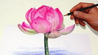 Drawing A Lotus Flower With Simple Colored Pencils |