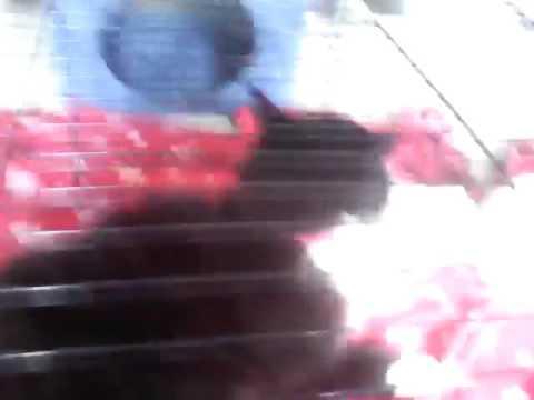 8ème Viéo De Gabi Le Cochon D'Inde Et Son Chat Avec Les Cochon D'Inde