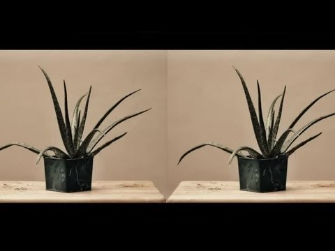 How to Make a Stereoscopic Image : Photography Tips