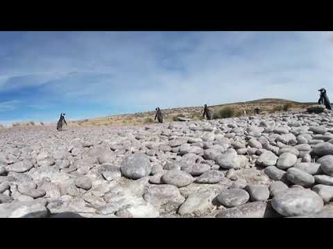 Play with Penguins in 360° Animals With...