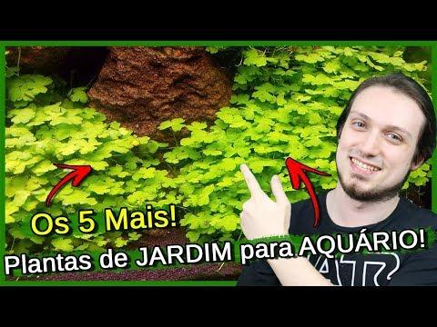 5 plantas de JARDIM para por em AQUÁRIO!