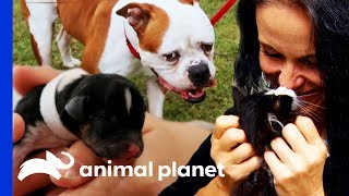 Delivering Puppies, Reuniting Families, and Helping Pets in Need! (Compilation) thumbnail