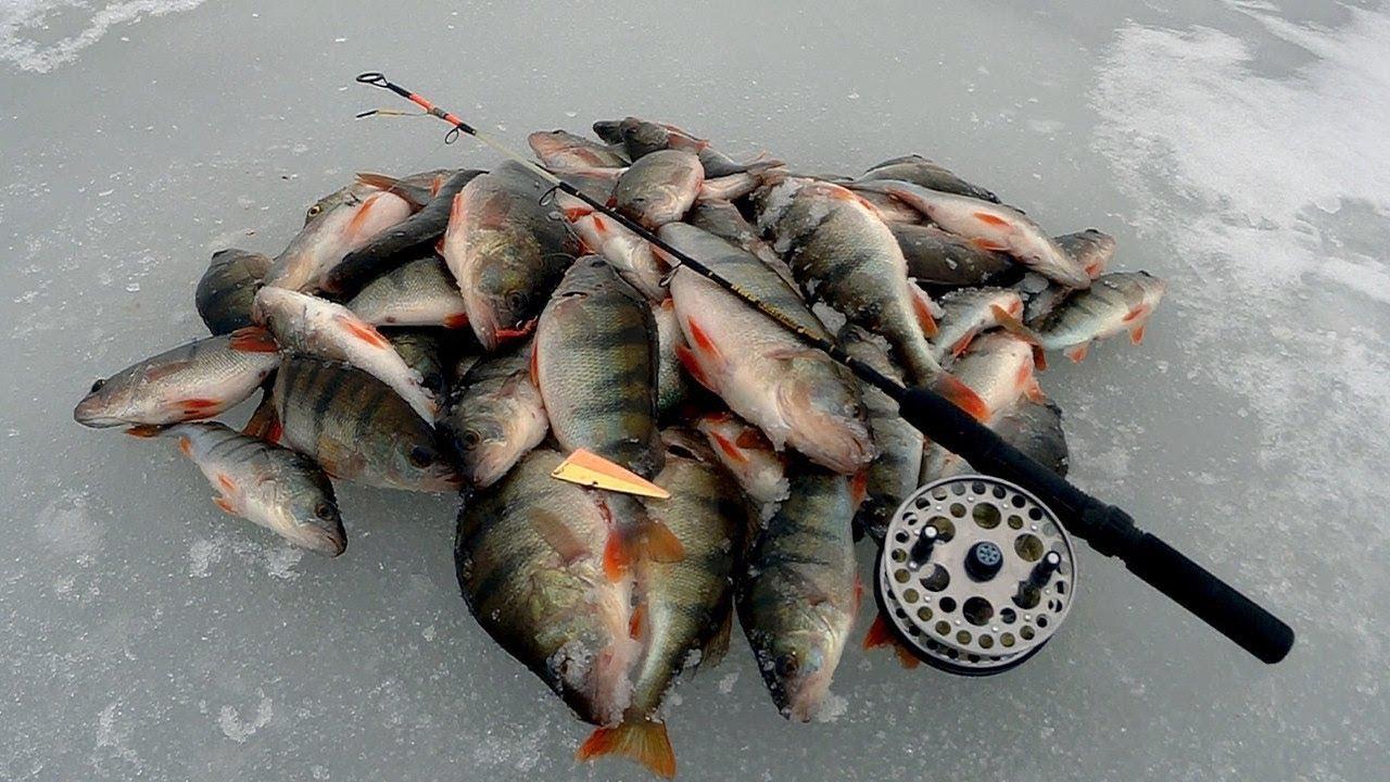 Зимняя рыбалка озеро чудское