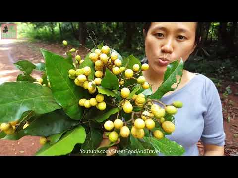 Vietnamese Fruit - Fresh Fruit in Forest Vietnam - Travel Vietnam Adventure