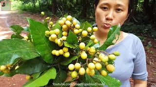 Vietnamese Fruit - Fresh Fruit in Forest Vietnam - Travel Vietnam Adventure