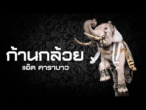 เพลงก้านกล้วย (ก้านกล้วย) ช้าง 11 เชือก ถวายสักการะพระบรมศพฯ