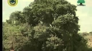 Seenaa Oromoo kutaa1ffaa 1