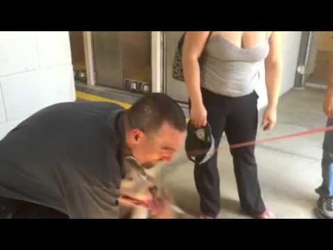 Stolen dog reunited with his owner after 7 months