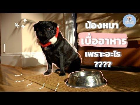 สุนัขไม่กินอาหาร สุนัขเบื่ออาหาร เพราะอะไร?   SudpadDog