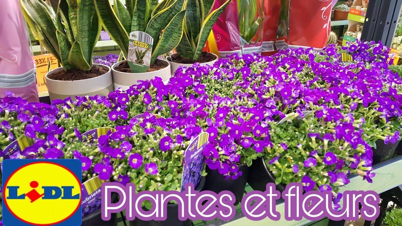 LIDL - PLANTES ET FLEURS - YouTube
